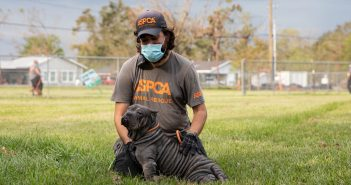 man wearing an aspca tshirt and hat helping a dog affected by hurricane laura