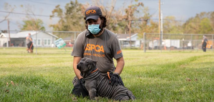 ASPCA Assists Nearly 200 Animals Impacted by Hurricane Laura