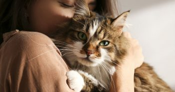 Dangers of Mold for Household Pets
