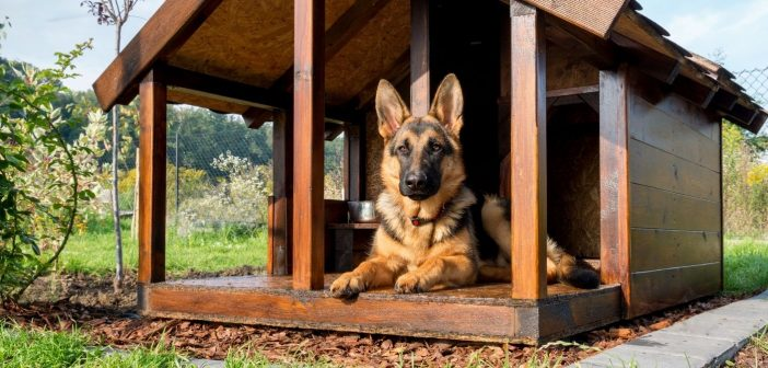 3 Quick Tips for Building a Doghouse