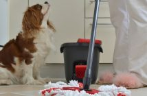 Clever House Cleaning Tips for Dog Owners