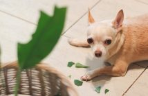 Ways To Keep Your Home Intact with Destructive Pets