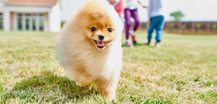 Puppy-Proofing: Ways To Prepare Your Yard for a New Dog