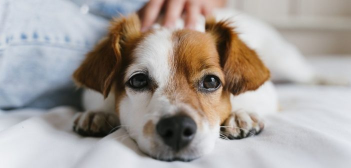 Essential Info You Need To Know Before Adopting a Dog