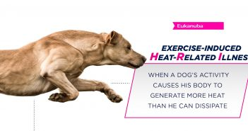 eukanuba logo and dog beside the definition of HRI