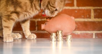 Give Your Pet a Comfortable Life Without Going Bankrupt