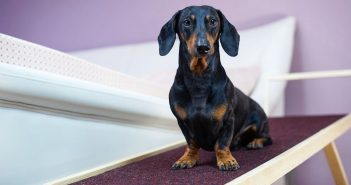 Home Improvements You Can Make for Your Pets