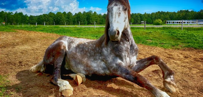How to Prep Your Horses for Summer