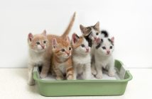 How To Effectively Train Your Kitten To Use The Litter Box