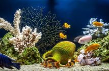 The Importance of Alkalinity in Your Aquarium