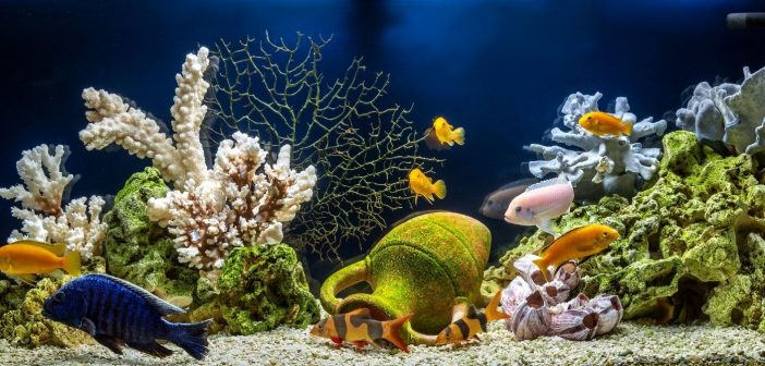 The Importance of Alkalinity in Your Saltwater Aquarium