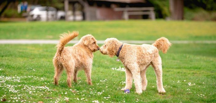 How To Introduce Your Dogs To New Furry Friends