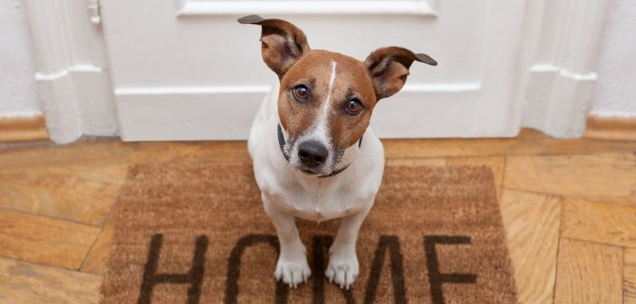 How To Care for Your Pet When You're Not Home