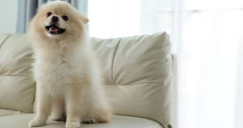 How To Keep Your Home Clean When You Have a Pet