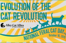 national feral cat day alley cat allies 2015