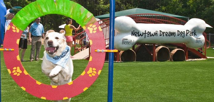 newton beneful dream dog park