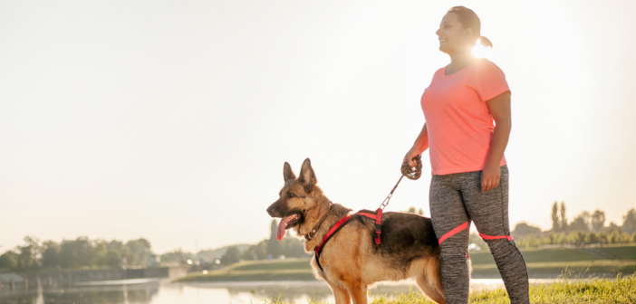 No-Pull Harnesses: Training Your German Shepherd Dog