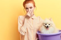 A Guide to Eliminating Pet Odor in Your Home