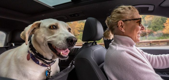 How To Have a Safe and Healthy Road Trip With Your Dog