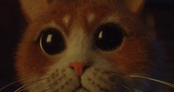 close up of the cat from scaredy cat