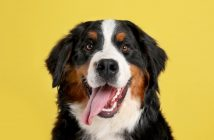 What to Know About a Dog's Undercoat