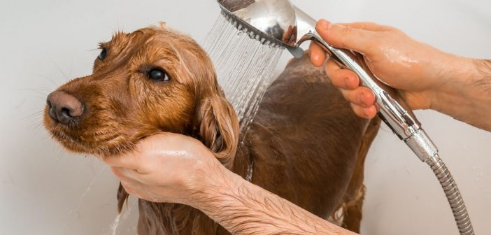 What You Need To Know About Grooming Your Dog at Home