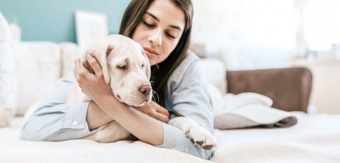 How To Calm Your Dog Before a Vet Visit