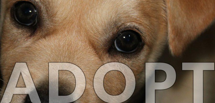 cute adopt a dog banner