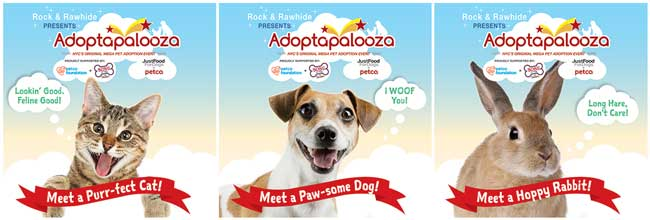 adoptapalooza featured adoption animals cat, dog, rabbit