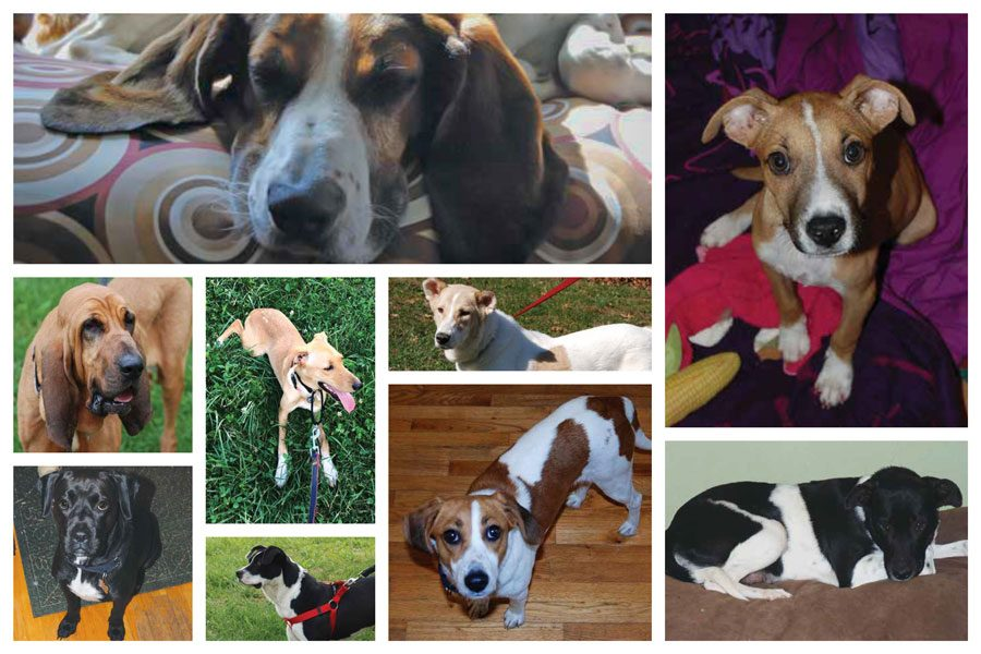 a collage of dogs cara fostered and featured in her book
