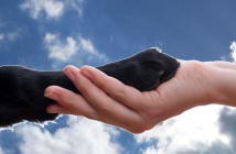 human hand holding paw against sky background