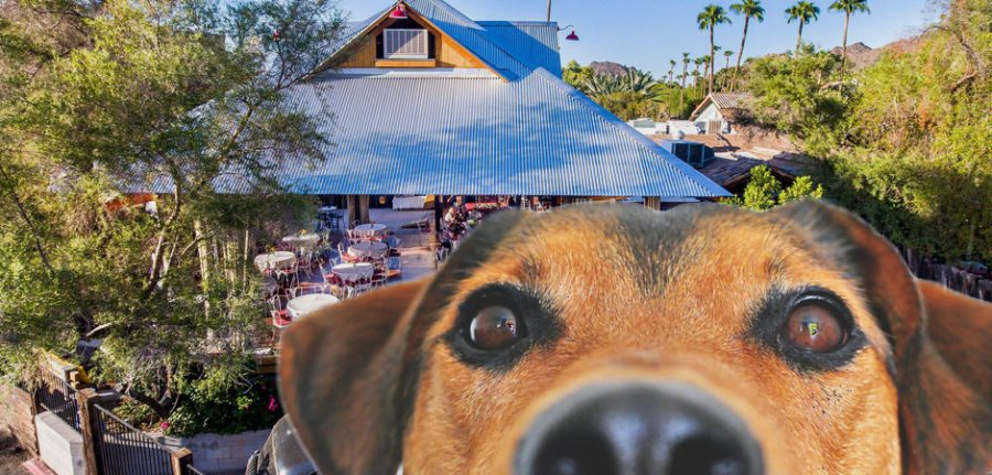 Aunt Chilada's Mexican restaurant behind a dog
