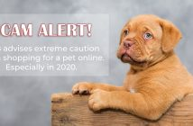 banner featuring a cute puppy with a scam alert warning