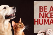 dog and cat looking at a sign that says be a nice human