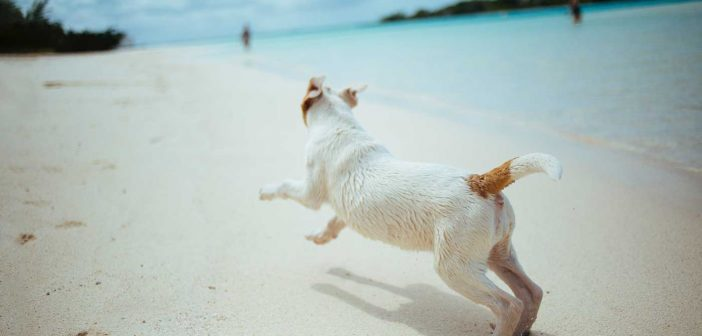 dog running on a beach