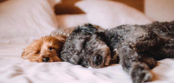 Social Distancing, Isolation, and Your Pet