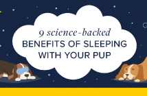 graphic illustration of 2 dogs at night