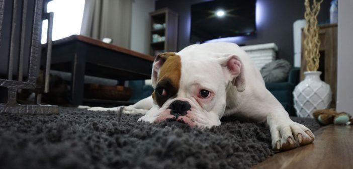 man's dog sulking on a rug
