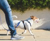 What Are Businesses That Pet Lovers Can Start?