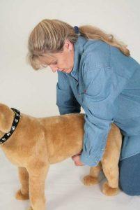 Denise Fleck illustrating canine abdominal compressions