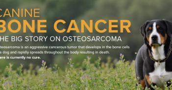 canine bone cancer infographic header