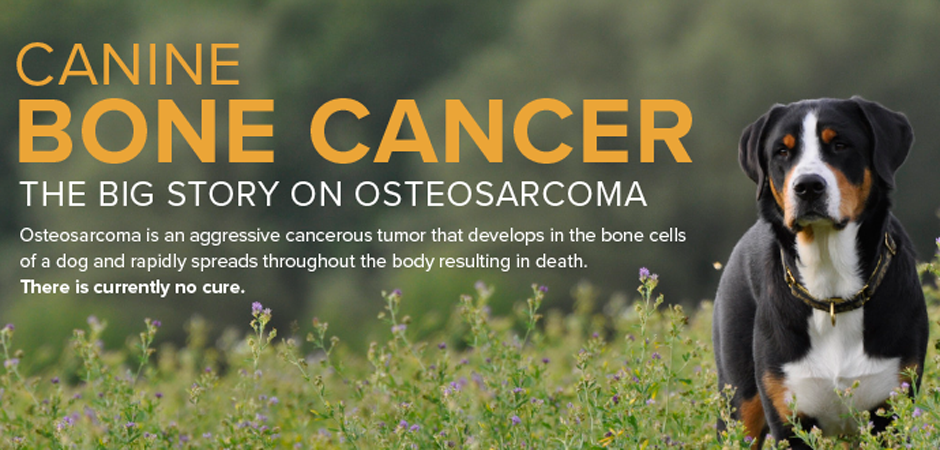 Osteosarcoma In Cats And Dogs