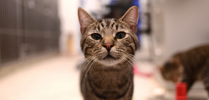 cat at the vet's office