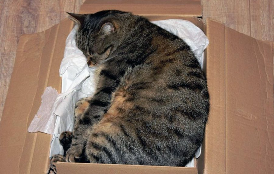 cat curled up inside a box
