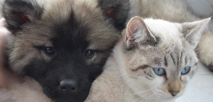 a dog and a cat napping together
