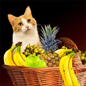cat sitting behind a fruit basket