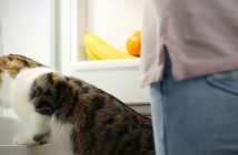cat and owner looking at vegetable drawers in the refrigerator