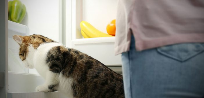 Should My Cat Eat Fresh Fruits And Vegetables?