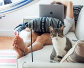 Travel Blogging With Cats: A Guide