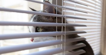 cat sitting in the window behind the window blinds